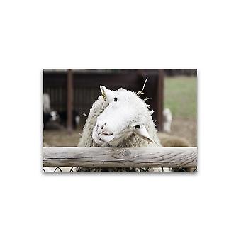 Curious White Sheep Poster -Afbeelding door Shutterstock