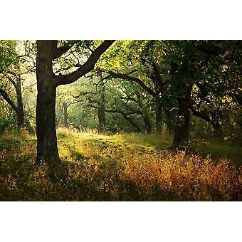 Fondo de pantalla Mural Morning Sunbeam