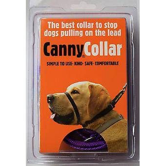 Canny Collar - Taille 3 - Violet