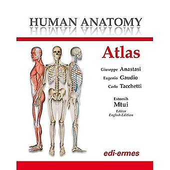 Human Anatomy Atlas