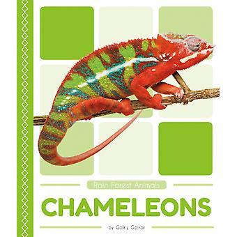Rain Forest Animals Chameleons