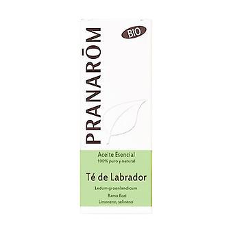 Labrador Tea Essential Oil 5 ml of essential oil