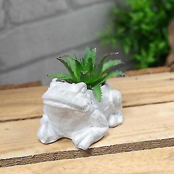 Mini sementti sammakko istuttaja mehevä