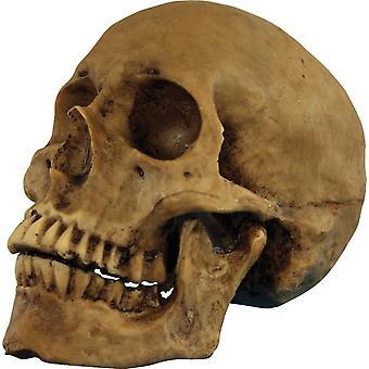 Skull Moveable