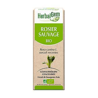 Organic rose - 15 ml 15 ml