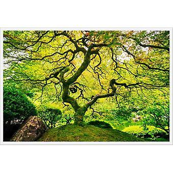 Árvore de bordo japonesa mural do papel de parede