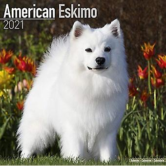 American Eskimo 2021 Wall Calendar by Created by Avonside Publishing Ltd