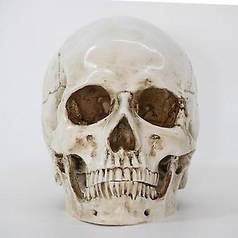 Skull Replica - Medical Statues Sculpture Halloween Home Decor