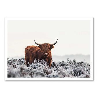 Art-Poster - Highlander - Jaap van den 50 x 70 cm