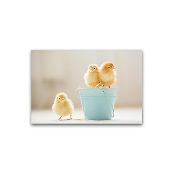 Suloinen Vauva Poikaset Juliste -Kuva Shutterstock