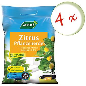 Sparset: 4 x WESTLAND® citrus plants Earth, 8 liters