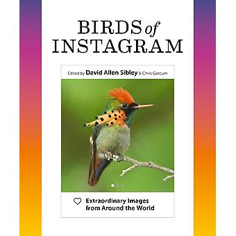 Birds of Instagram av Introduksjon av David Allen Sibley & Redigert av Chris Gatcum
