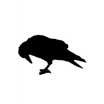 Curiology Poes Raven Pin Badge