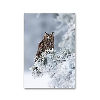 Lang-eared Ugle. Plakat -Bilde av Shutterstock