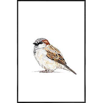 JUNIQE Print - Moineau - Posters d'oiseaux en brun & blanc