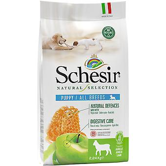 Schesir Natural Selection All Breeds Puppy Lamb (Dogs , Dog Food , Dry Food)