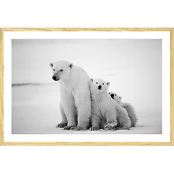 Poster dieren familie ijsbeer