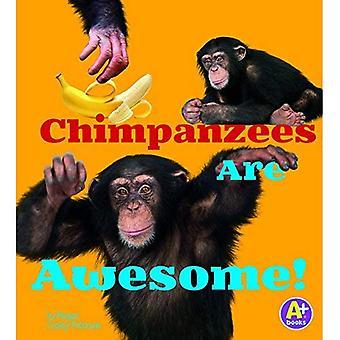 Schimpanser är Awesome! (Awesome afrikanska djur)