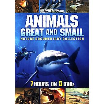 Animals Great & Small [DVD] USA import