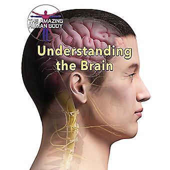 Understanding the Brain by Joanne Randolph - 9780766090033 Book