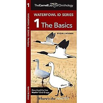Cornell Lab of Ornithology Waterfowl Id: #1 the Basics