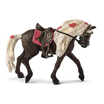 Rocky Mountain Horse Mare Horse Show USA import