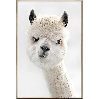 JUNIQE Print - Peeky Alpaca - Wildlife Plakat i hvid