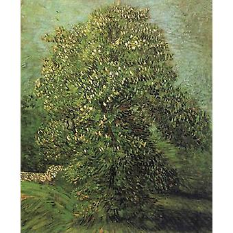 Chestnut Tree in Blosson, Vincent Van Gogh, 46.5 x56cm