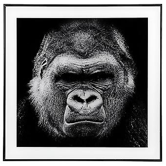 Decor Picture Square Grande Gorilla