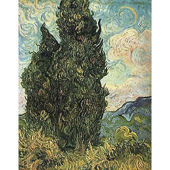 Cypuristimet, Vincent Van Gogh, 60x50cm