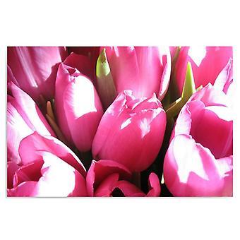 Canvas, foto op doek, roze tulpen 2