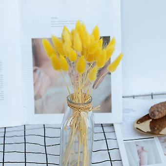 Rabbit Tail Grass Natural Dried Flowers Artificial Decoration