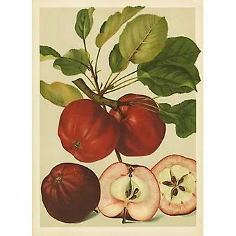 Red Veli Apples II Poster Print by  PI Collection (10 x 14)