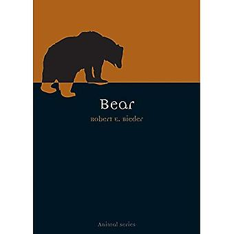 Bär (Tiere)