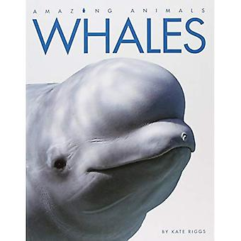 Whales (Amazing Animals (Creative Education Hardcover))