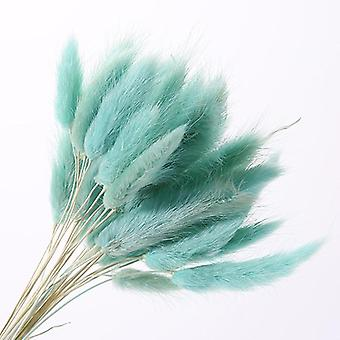 Fiori secchi naturali, mazzo di erba coda di coniglio, colorato Lagurus Ovatus Reale