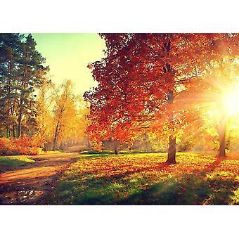 Behang muurschildering herfst bomen