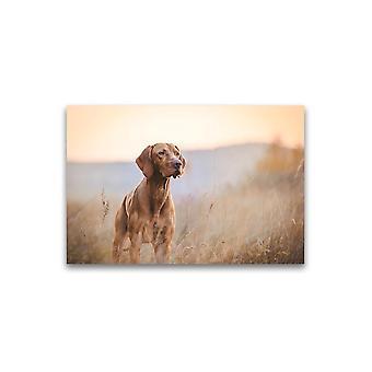 Vakker hund i gressfelt plakat -bilde av Shutterstock