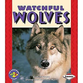 Lobos vigilantes