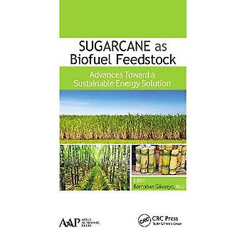 La canna da zucchero come materia prima per i biocarburanti avanza verso una soluzione energetica sostenibile