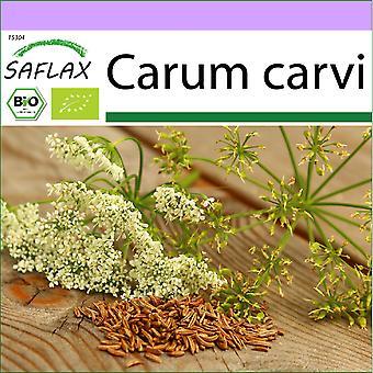 Saflax - 800 frø - Organisk - Caraway - BIO - Carvi - BIO - Cumino - Ecológico - Comino - BIO - Kümmel
