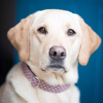 Dog Collar - lavender spot