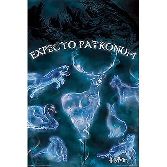 Harry Potter plakat Expecto Patronus Patronus tal. 91,5 x 61 cm