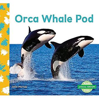 Orca walvis Pod (dierlijke groepen)