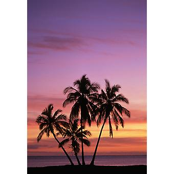 Hawaii Molokai Cluster Of Palm Trees With Beautiful Sunset Background PosterPrint