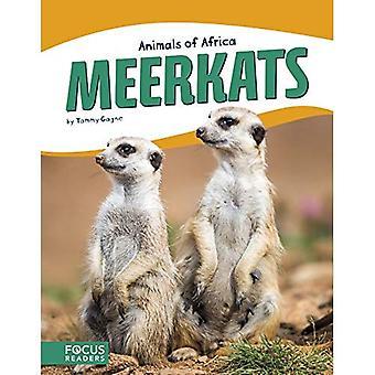 Animaux d'Afrique: suricates