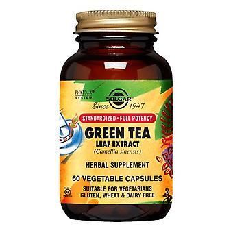 Solgar SFP Green Tea Leaf Extract Vegetable Capsules, 60 V Caps