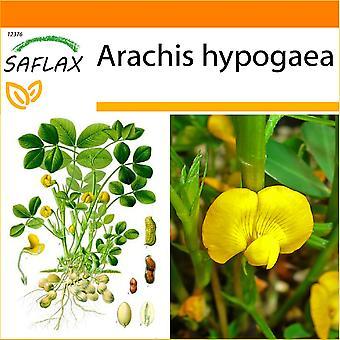 Saflax - jardin dans le sac - 8 graines - plantes d'arachide - Cacahuète - arachides - Cacahuete - Erdnuß