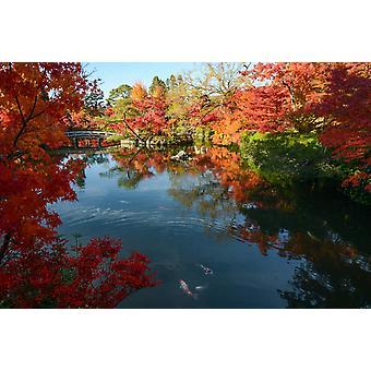 Tapeta Mural Japoński staw Ogród z jesiennym klonem