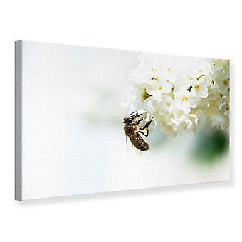 Lienzo de impresión el abejorro y la flor